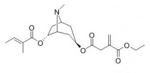 Schizanthine M